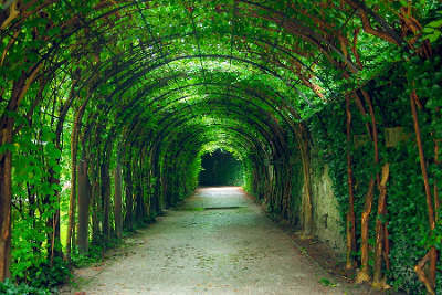 Tunnel made of leafy branches