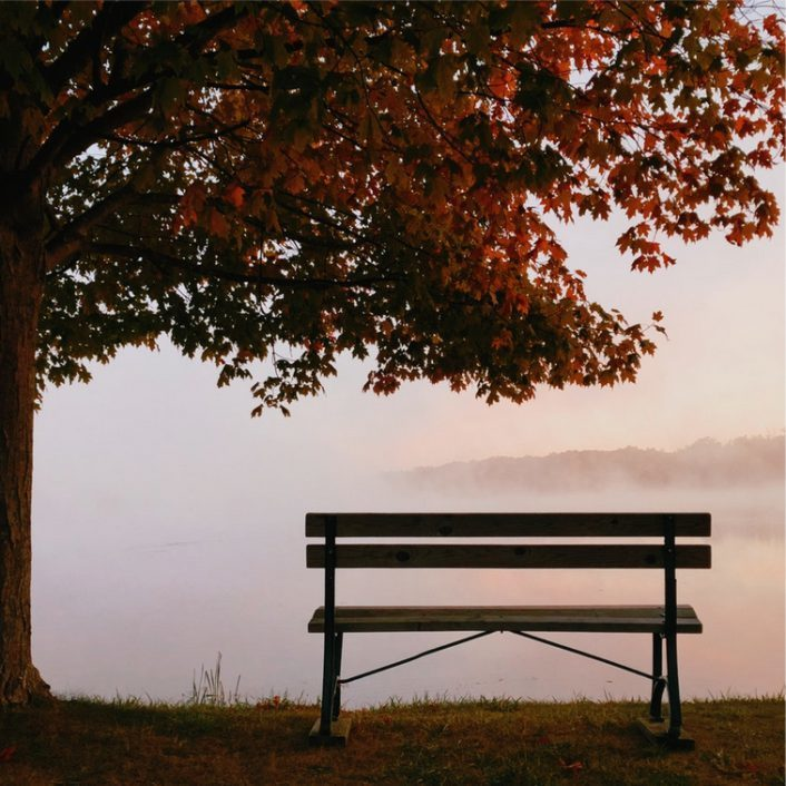 park bench under a autumn-colored tree by the water