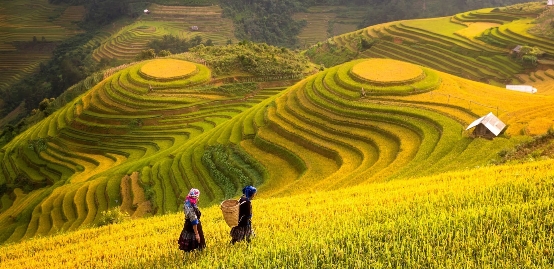 Two people on terraced fields
